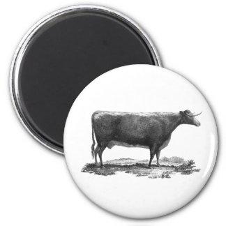 Imán de la aguafuerte de la vaca del vintage