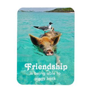 Imán de la amistad del cerdo de la natación