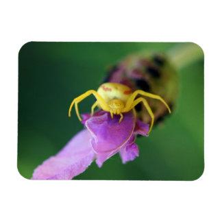 Imán de la araña del cangrejo de la flor