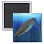 Imán de la ballena azul