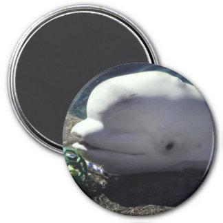 Imán de la ballena de la beluga
