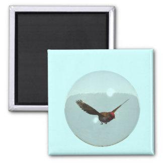 Imán de la burbuja del pájaro cantante