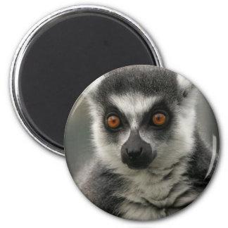 Imán de la cara del Lemur