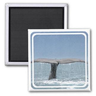 Imán de la cola de la ballena
