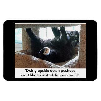 Imán de la extremidad del ejercicio del gato negro