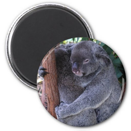 Imán de la familia de la koala
