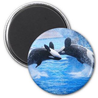 Imán de la foto de la ballena