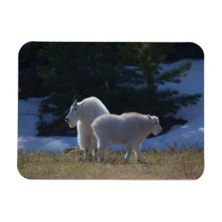Imán de la foto de las cabras de montaña