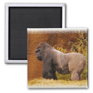 Imán de la foto del gorila del Silverback