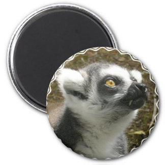 Imán de la foto del Lemur