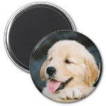 Imán de la foto del perrito del golden retriever