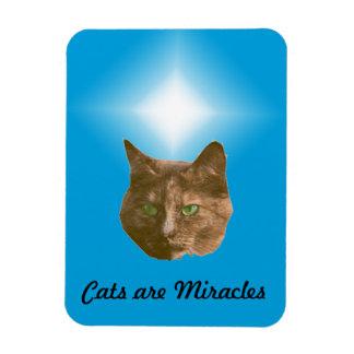 Imán de la foto - los gatos son milagros