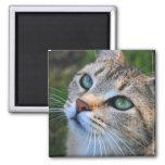 Imán de la fotografía del gato de Tabby