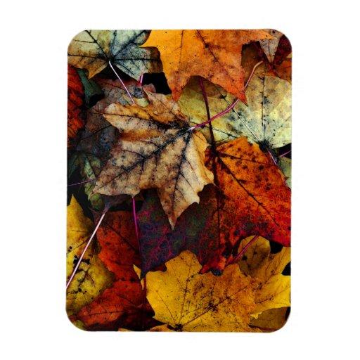 Imán de la Fotografía-Flexi del follaje de otoño d
