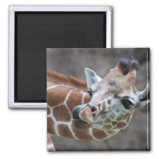 Imán de la lengua de la jirafa