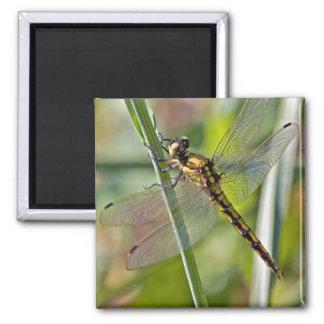 Imán de la libélula