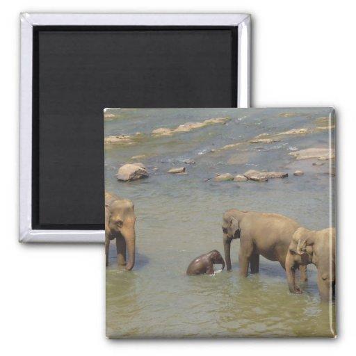 Imán de la manada del elefante