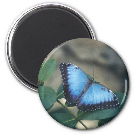 Imán de la mariposa