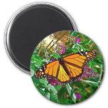 Imán de la mariposa, monarca