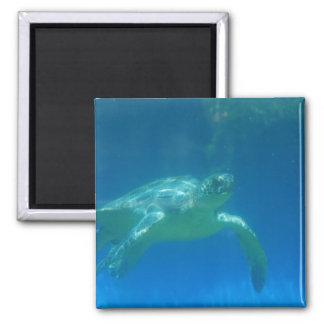 Imán de la nadada de la tortuga de mar