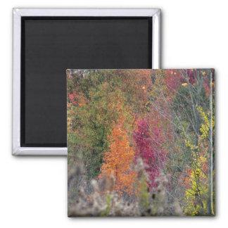 Imán de la paleta del otoño