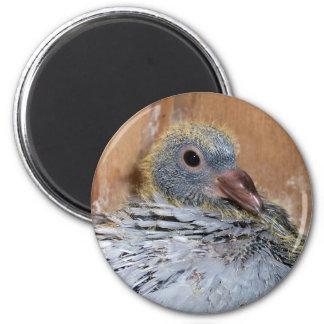 Imán de la paloma autoguiada hacia el blanco del b