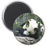 Imán de la panda gigante