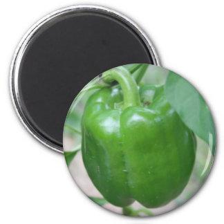 Imán de la pimienta verde