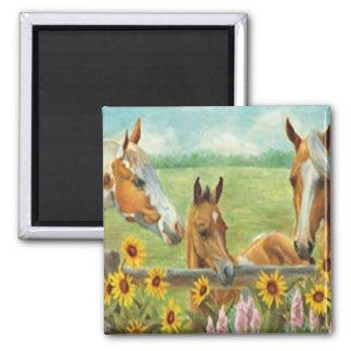 Imán de la pintura del caballo