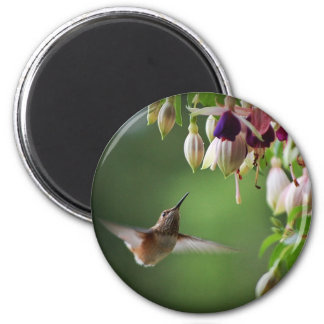 Imán de la planta del colibrí y de la flor de Fush