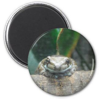 Imán de la rana de la leche del Amazonas