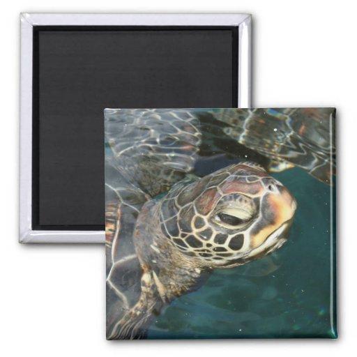 Imán de la tortuga de la natación