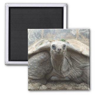 Imán de la tortuga de las Islas Galápagos