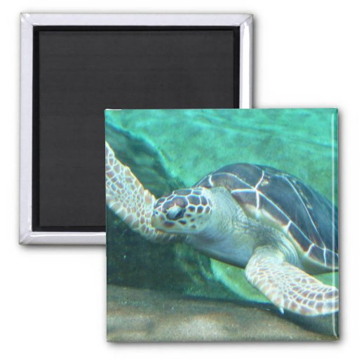 Imán de la tortuga de mar verde