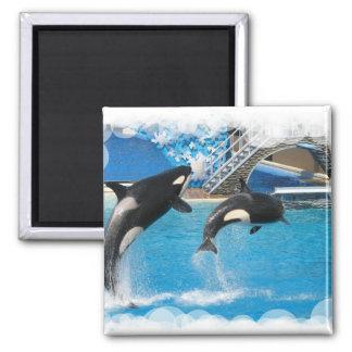 Imán de las ballenas de la orca