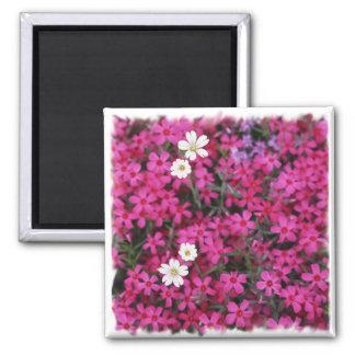 Imán de las flores rosadas y blancas
