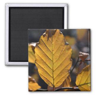 Imán de las hojas de otoño