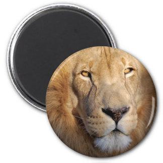 Imán de las imágenes del león
