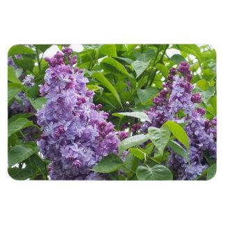 Imán de las lilas