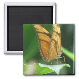 Imán de las mariposas del amor