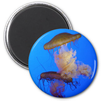 Imán de las medusas