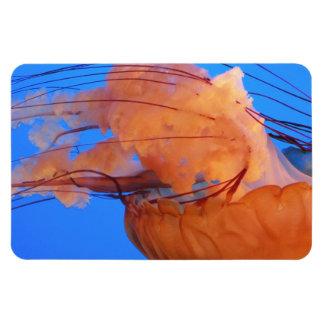 Imán de las medusas de la natación