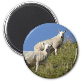 Imán de las ovejas de la hermana