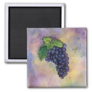 Imán de las uvas de vino del pinot negro