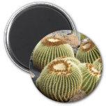 Imán de los cactus