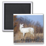 Imán de los ciervos del albino
