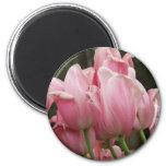 Imán de los festivales del tulipán