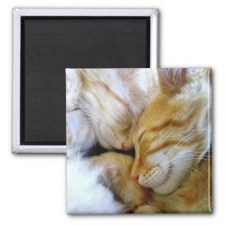 Imán de los gatitos del Snuggle