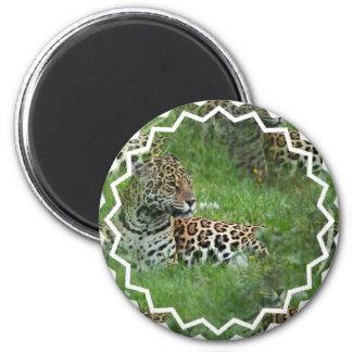Imán de los gatos de Jaguar