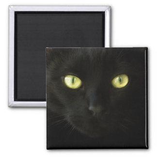 Imán de los ojos de gato negro